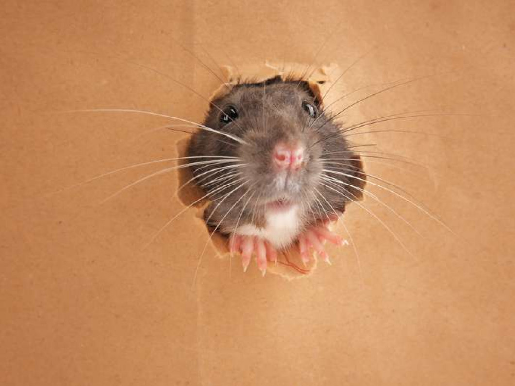 Why is it important to keep rodents out?